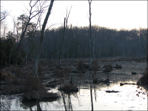 Bay View trail wetlands in December